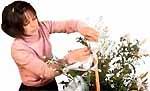 Встреча с флористом - практические советы
