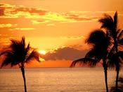 фото пальмы
